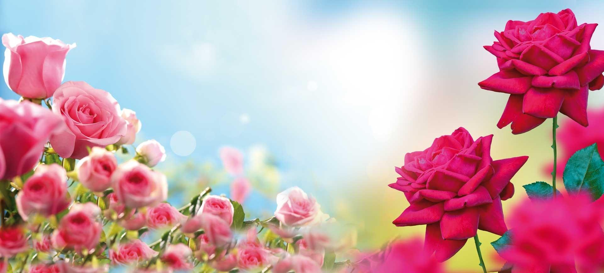 Terre de Rose